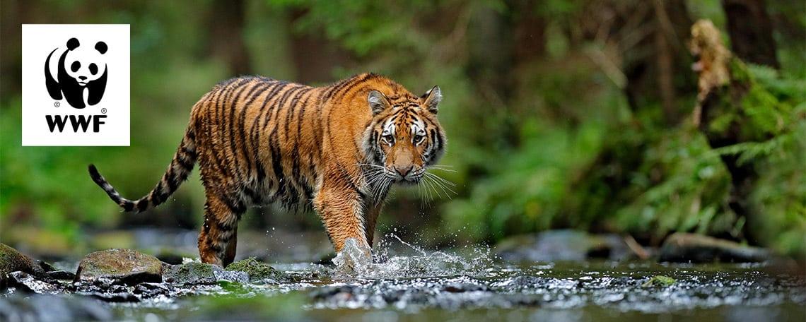 wwf jobs tiger header